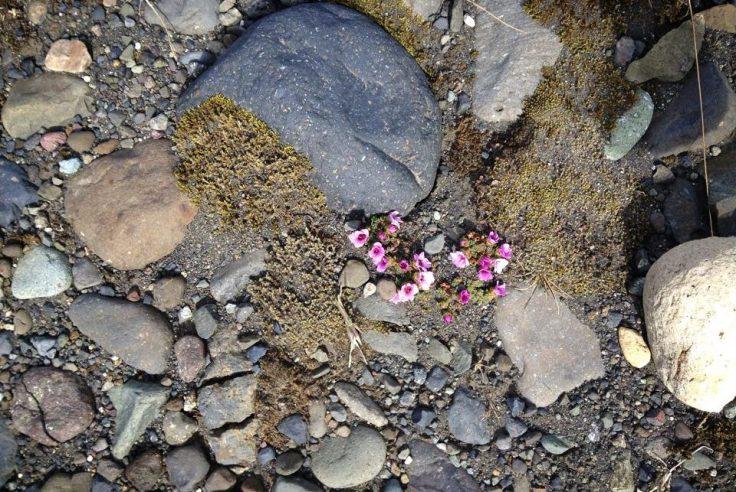 cropped-icelandflowers1.jpg